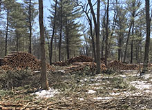 Habitat Management Ludington