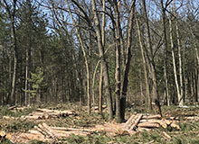 Grand Haven Habitat Management